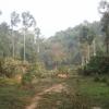 Htamanthi basecamp