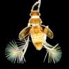 Featherwing beetle, Salu River, Myanmar